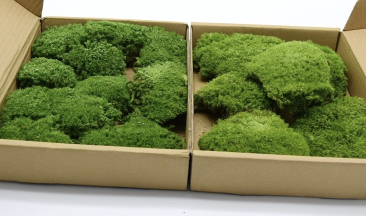 Preserved pole moss